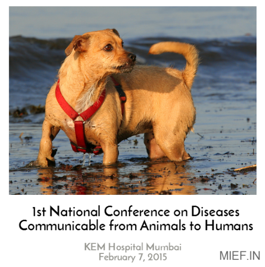 national conference on diseases communicable from animals to humans zoonosis mief